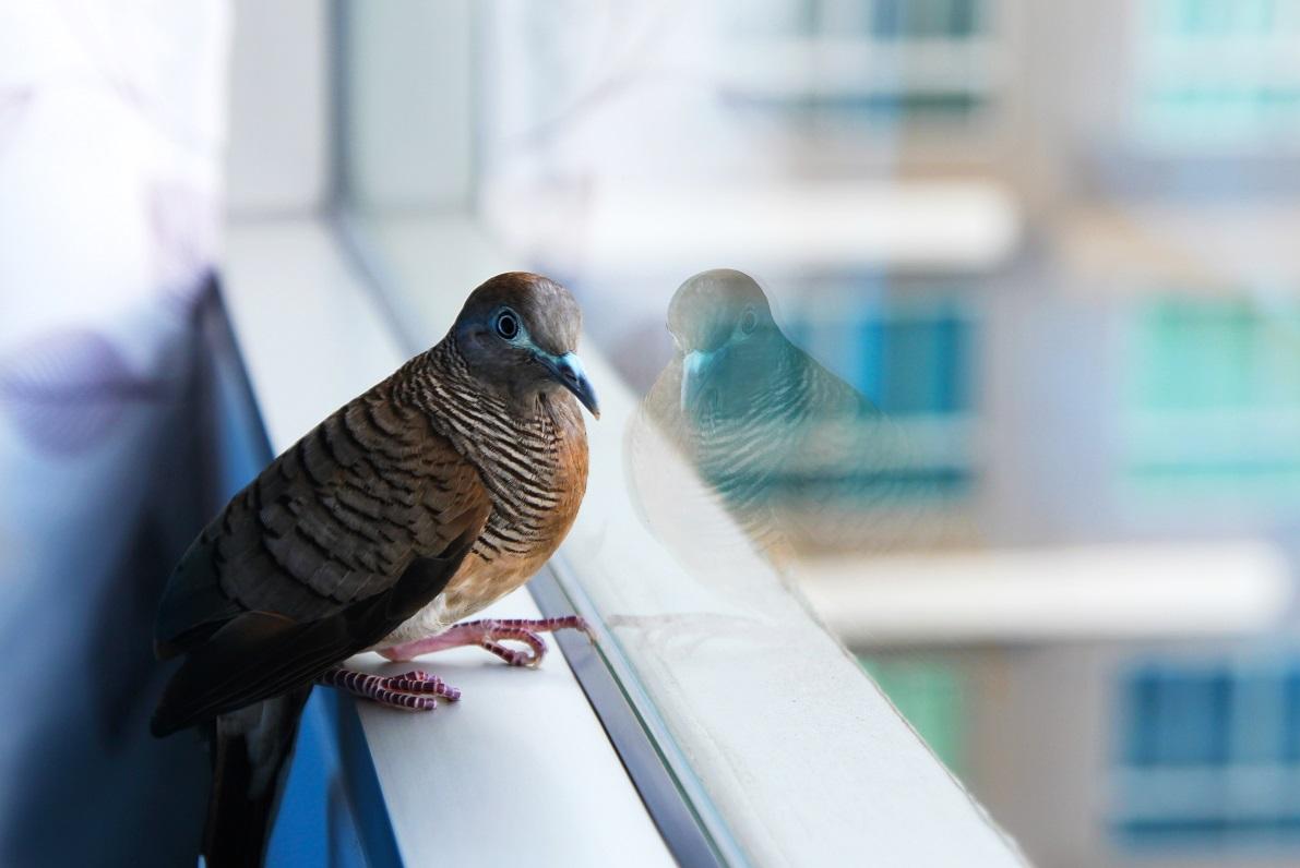 bird strike prevention film houston